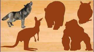 Wild Animals Wooden Board | Learn Wild Animals Name for Kids | Video for Children
