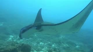 Live on board diving trip with Uber Scuba Komodo