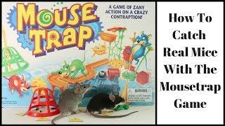 Catching Real Mice With the Mouse Trap Board Game.  Mousetrap Monday.