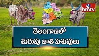 Telangana Biodiversity Board To Research On Thurupu Cattle | Telugu News | hmtv