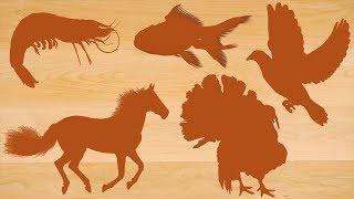Learn Farm Animals Name for Kids | Animal's Wooden Board for Children | Video for Kids