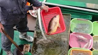 Selling live One-spot Snapper  On Board at Seafood Floating Market in Sai Kung Hong Kong