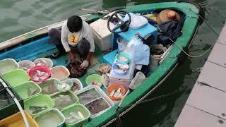 Killing live One-spot Snapper Fish 火點 On Board at Seafood Floating Market in Sai Kung Hong Kong